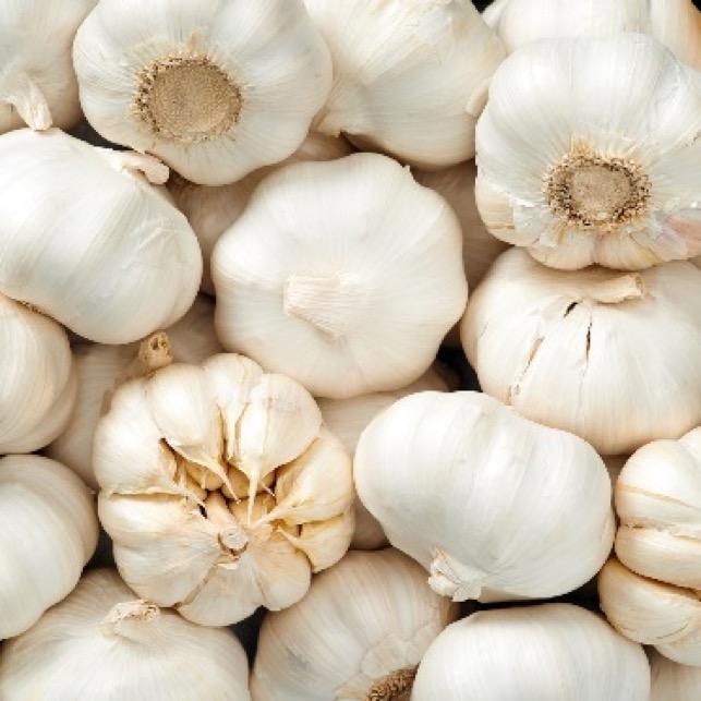 a close up pile of garlic bulbs