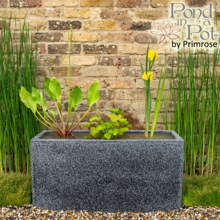 Wildlife Friendly 80cm Pond in a Trough - Black Poly-Terrazzo Trough Planter