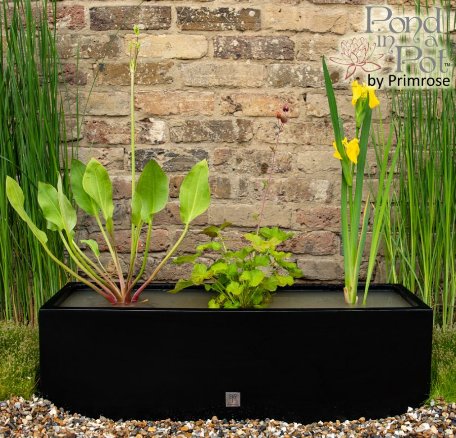 W80cm 'Pond in a Pot' Trough Black Fibreglass Planter