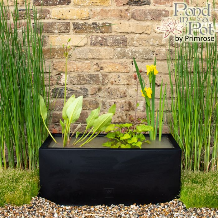 H24cm Pond-In-A-Trough Black Wildlife-Friendly Zinc Planter