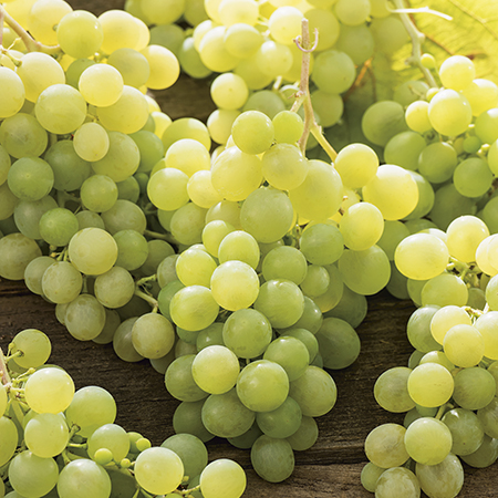 3ft 'Lakemont' Grape Vine | 2L Pot | Seedless | Outdoor