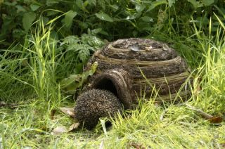 Igloo Hedgehog Home - Hogitat