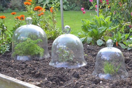 Victorian Glass Bell Jar Cloches - Set of 3