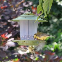 Eco Beacon Plastic Seed Bird Feeder