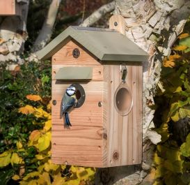 All Seasons Bird Nest Box with Integrated Camera