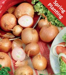 ±250gr. Shallots 'Red Sun' Bulbs