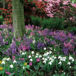 Ultimate Woodland Garden Collection | 60 Flower Bulbs | Bluebell, Fritillaria, Daffodil & Chionodoxa Mix