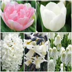 Fresh Spring Shades Collection | 48 Flower Bulbs | Tulip, Hyacinth, Muscari & Daffodil Mix