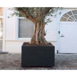 200cm Buxus Fibreglass Cube Planter In Black By Adezz