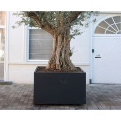 200cm Buxus Fibreglass Cube Planter In Black