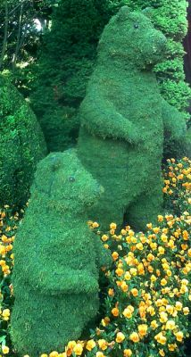 Topiary Bear standing With Moss Filling
