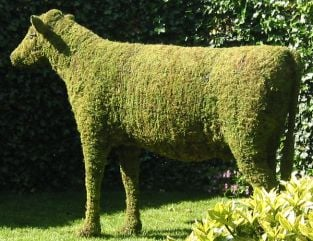 Topiary Cow With Moss Filling