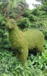 Topiary Deer With Moss Filling