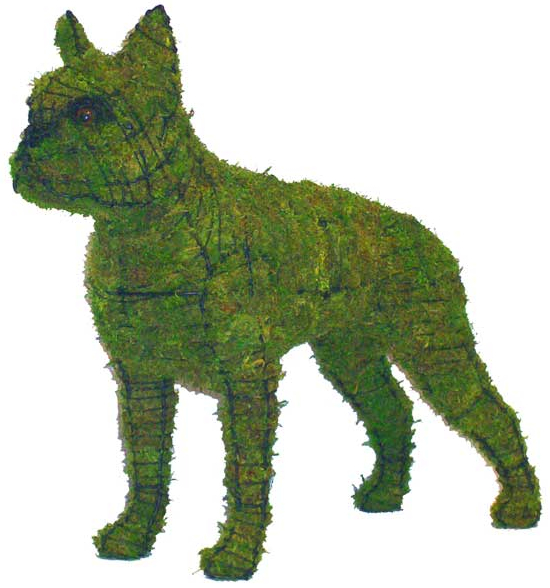 Topiary Dog Boston Terrier With Moss Filling
