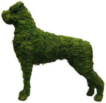 Topiary Dog Boxer With Moss Filling