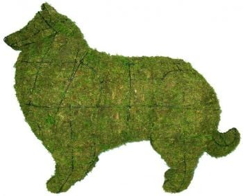 Topiary Dog Collie With Moss Filling