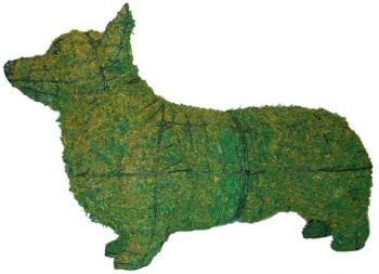 Topiary Dog Corgi With Moss Filling