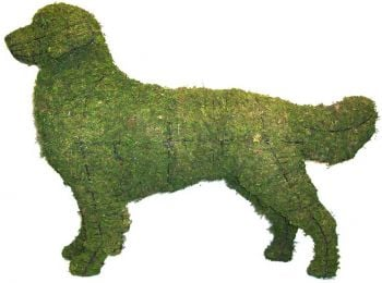Topiary Dog Golden Retriever With Moss Filling
