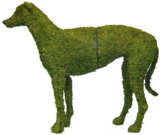 Topiary Dog Greyhound With Moss Filling