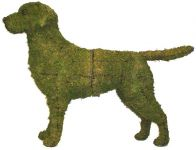 Topiary Dog Labrador Retriever With Moss Filling