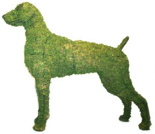 Topiary Dog Weimaraner With Moss Filling