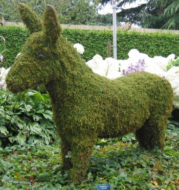 Topiary Donkey With Moss Filling