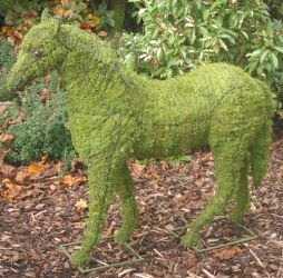 Topiary Horse With Moss Filling