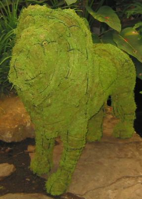 Topiary Lion With Moss Filling