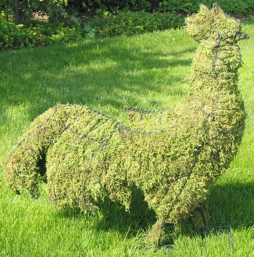 Topiary Rooster With Moss Filling