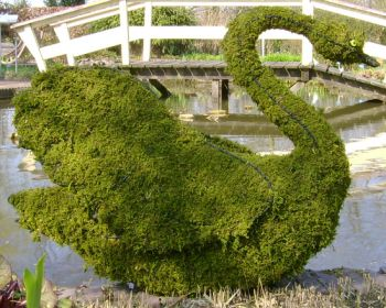 Topiary Swan With Moss Filling