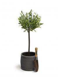 80cm Artificial Olive Tree By Primrose™