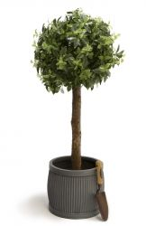 110cm Artificial Citrus Tree By Primrose™