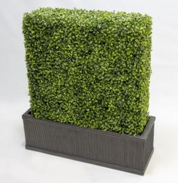 L60cm Topiary Boxwood Hedge with Planter By Primrose™