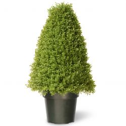 "18"" Boxwood Artificial Tree in Green Growers Pot"