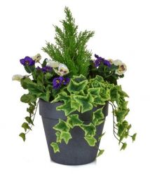 H60cm Medium Artificial Planter - Purple & White Pansy With Cedar