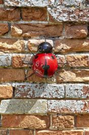 Garden Decoration Ladybird by Smart Garden