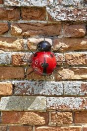 Smart Garden - Garden Decoration Ladybird