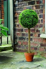 Pair of 80cm Artificial Boxwood Topiary Ball Trees by Gardman
