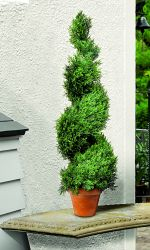 Artificial Potted Cypress Topiary Swirl - 80cm