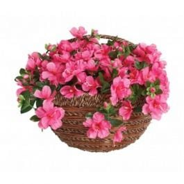 35cm Artificial Pink Azealia Wall Basket