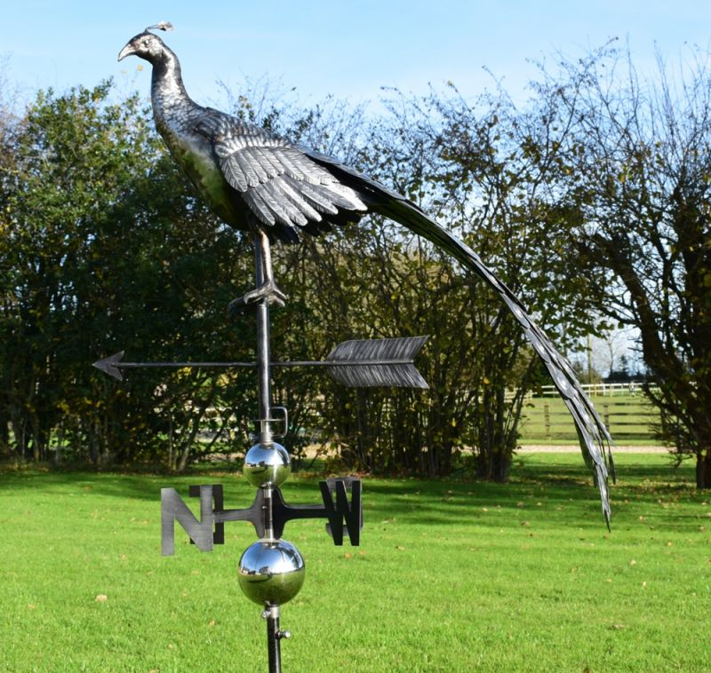 Stainless Steel Plant Stakes : D stainless steel peacock weathervane with garden stake £