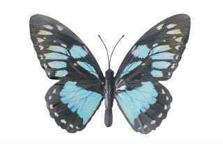 Metal Butterfly Wall Art - Cyan