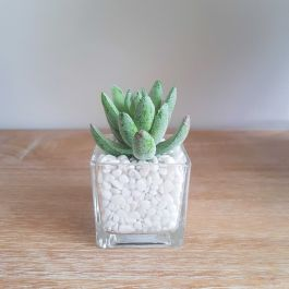 8.5cm Miniature Glass Pot with Artificial Succulent  Plant
