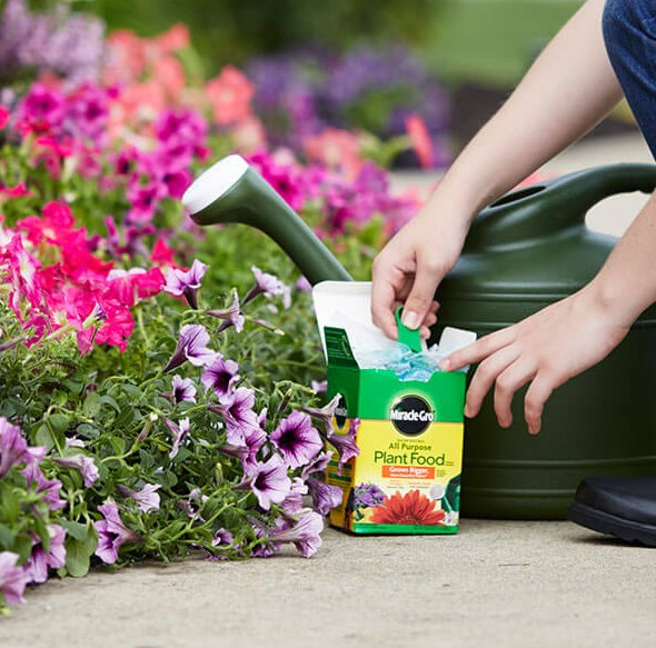 Gardener planting with miracle gro