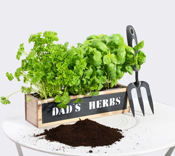 'Dad's Herbs' 34cm Herb Garden Windowsill Planter with Herbs and Compost
