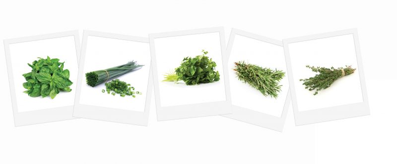 Zesty Herb - Grow Your Own Herb Garden Kit - 5 Tantalising Herbs to Grow