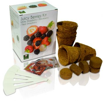 Juicy Berries - Grow Your Own Herb Garden Kit - 3 Tasty Berries to Grow