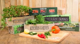 Ultimate Grow Your Own Kitchen Gardens Kit - 4 Windowsill Planters with Seeds and Compost