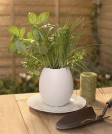 Ostrich Egg - Grow Your Own Herb Kit - Chive, Basil, Parsley
