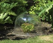 Botanico Clear Dome Cloches 4 Pack Small (25.5cm)